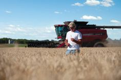 """New """"Superwheat"""" Could Increase Yields By 30%"""