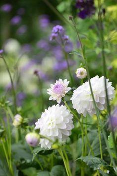 White and purple tones