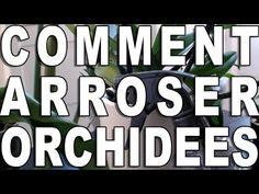 Promesse de Fleurs - YouTube Comment Planter, Orchids, Passion, Youtube, Art Floral, Nature, Voici, Aloe Vera, Cactus