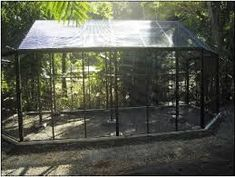 building an outdoor aviary - Google Search #aviariesideas