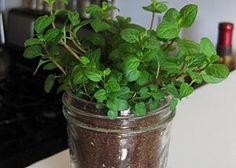 Diy mason jar herb terrarium