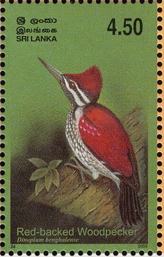 Black-rumped Flameback stamps - mainly images - gallery format