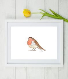 Robin, robin art, robin bird, robin painting, red robin, bird art, bird painting, garden bird