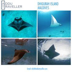 #beach Whale #Sharks #MantaRays #diving #MantaPoint #BrokenRock #sandbank #Dhigurah #budget #travel #Maldives #ttot