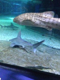 Ocean Park, Whale, Aquarium, Animals, Fish Stand, Animales, Animaux, Fish Tank, Aquarius