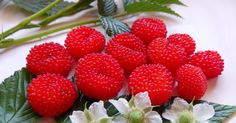 If you are looking for a tasty little bush food to fit into a sunny corner look no further than the Atherton Raspberry.  The fruits are high...