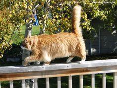 Murchyk the Cat