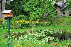 #kitchener Woodside National Historic Site Kitchener Ontario, Historical Sites, Vineyard, Canada, Plants, Outdoor, Outdoors, Vine Yard, Vineyard Vines