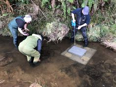 Contraptions that resemble upside-down kitchen sinks have been placed in the Waikawa River in Southland to attract a notoriously elusive native fish species. Kitchen Sinks, South Island, Freshwater Fish, Lofts, Scientists, Fresh Water, Strong, River, Loft Room