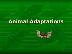 Animal adaptations i
