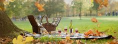 picnic in the park - Google Search