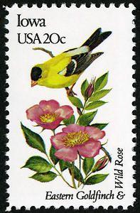 Iowa - Eastern Goldfinch & Wild Rose