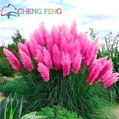 200 Pcs Sementes Pátio E Jardim Vasos de Plantas Ornamentais Pampas Grama Novas Flores (Branco Amarelo rosa Roxo) Cortaderia Gramíneas *