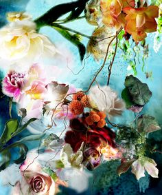 gorgeous photography by isabelle menin flowers