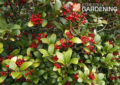 Get the most out of your garden, even in winter. Check out our list of winter hardy plants for your garden and grow on all year long!