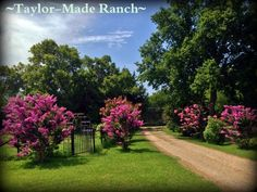 Wordless Wednesday: Tree-Lined Road To My Heart #TaylorMadeRanch