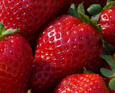 STRAWBERRY SEEDS (Fragaria ananassa) bright red fruit has great flavor (Organic 50 seeds) 2013 collection Strawberry Seed, Strawberry Plants, Grow Strawberries, Strawberry Nutrition, Strawberry Sauce, Strawberry Fields, Tamales, Organic Vegetables, Fruits And Vegetables