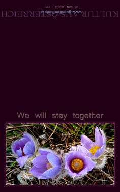 We will stay together Pandora, Poster, Plants, Cards, Art, Photo Illustration, Plant, Posters, Movie Posters
