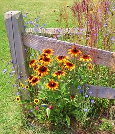 A grouping of flowers that Butterflies (and Bees) love!