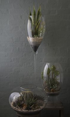 Desert Terrarium Grouping 2 Another inspiratoin – different heights!