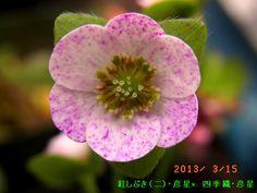 13b-3-151.jpg 640×480 ピクセル
