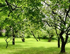 How to design a fruitful home orchard