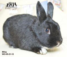 9/22 Bernadette - URGENT - Jefferson Feed in Jefferson, Louisiana - ADOPT OR FOSTER - Young Female Polish Rabbit