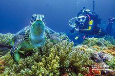 節令逍遙遊 浮潛與潛水篇-與海龜共游