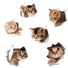 Kittens Cutest, Cute Cats, Cats And Kittens, Cat Design, Animal Design, Pet Corner, Cat Clipart, Animal Crafts For Kids, Cat Photography