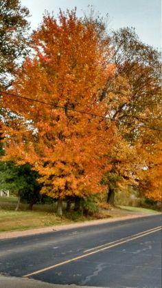Fall in marshfield wi