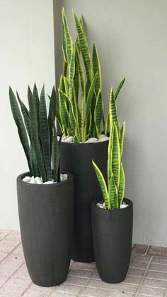 32 trendy plants indoor low light air purifier sansevieria trifasciata - All For Garden Sansevieria Trifasciata, Sansevieria Plant, Indoor Plants Low Light, Plants Indoor, Hanging Plants, Pots For Plants, Indoor Plant Decor, Porch Plants, Balcony Plants