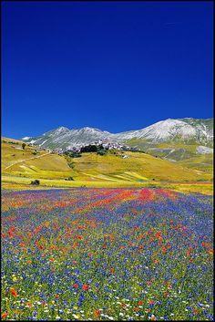 Photos of Italy | Castelluccio ~ field of poppies, Umbria, Italy by zio.paperino~~