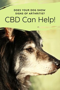 40 Best Hemp CBD for Dogs images in 2019 | Oils for dogs