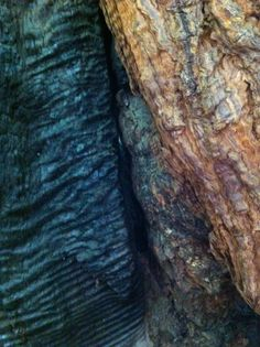 tree bark: partially burned sequoia