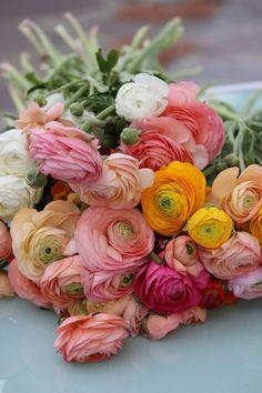 Bouquet de renoncules colorées pour emmener le beau temps Beautiful Flowers Garden, Jolie Fleur, Floral Bouquets, Floral Wreath, Ranunkler, Ranunculus, Trees To Plant, Flower Power, Floral Arrangements