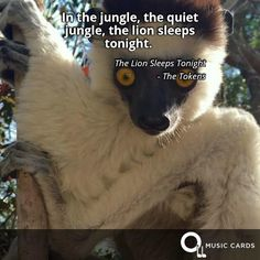 In the jungle, the quiet jungle, the lion sleeps tonight. - The Tokens