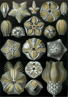El Hurgador [Arte en la Red]: Ernst Haeckel ['Kunstformen der Natur'…