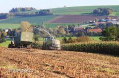 Maisoogst - Maize harvest - Maisernte - Dutch Pictures | Agriculture - Landwirtschaft - Landbouw - pictures and video'sDutch Pictures | Agriculture – Landwirtschaft – Landbouw – pictures and video's
