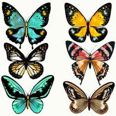 Resultado de imagem para borboletas coloridas desenho