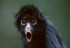Cara de susto animal. Los animales también se sorprenden (4)