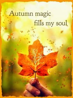 Autumn magic fills my soul Autumn Day, Hello Autumn, Autumn Leaves, Winter, Fallen Leaves, October Country, Seasons Of The Year, Happy Fall Y'all, Autumn Inspiration