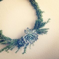Rosemary Wreath With Succulents -- maybe hang a couple of these somewhere?