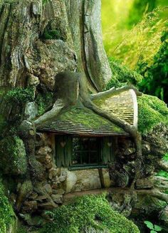 treehouses | Holland | Treehouses/Hobbit Holes