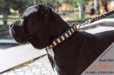 Decorated Leather Dog Collar for Cane Corso