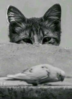 Pájaro y gato