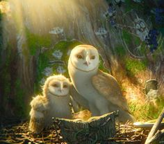 Best Animations for Kids: Legend of the Guardians: The Owls of Ga'Hoole   Noble and Royal Bambini