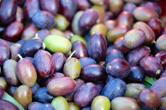 Harvesting Olive Oil in Tuscany