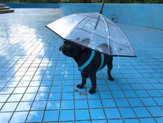A dog umbrella that's gonna seem heaven-sent to pet parents whose pups refuse to pee when it's raining cats and dogs. 30 Products That Totally Understand Your Struggles Dog Umbrella, Dog Smells, Animal Help, Raining Cats And Dogs, Heaven Sent, When It Rains, Life Is Hard, Understanding Yourself, Chihuahua