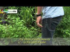 ¿Conoces el Cálamo aromático (Acorus calamus)? ColourYourLife. Subt-ESP - YouTube