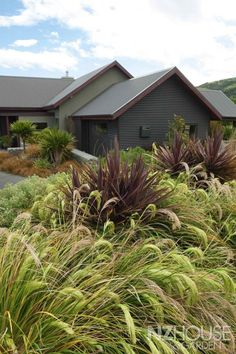 Tall purple Phormium (Dark Delight?) with Chionochloa flavicans
